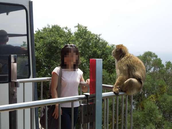 ケーブルカーを降りると猿がお出迎え
