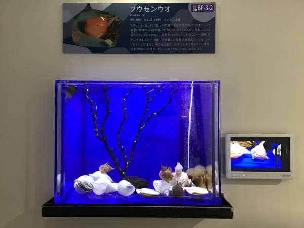 流氷館に展示された生き物