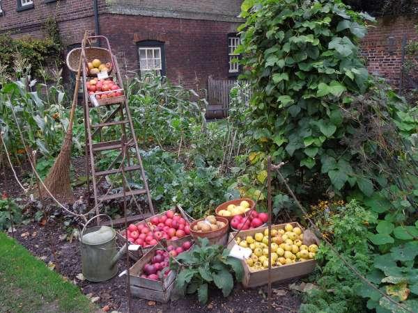 fenton houseの庭