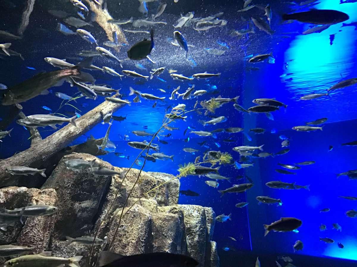 千歳水族館の魚たち