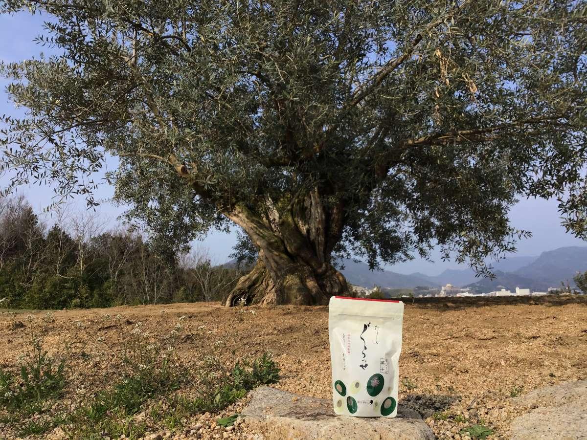 樹齢千年のオリーブの木とオリーブグラッセ
