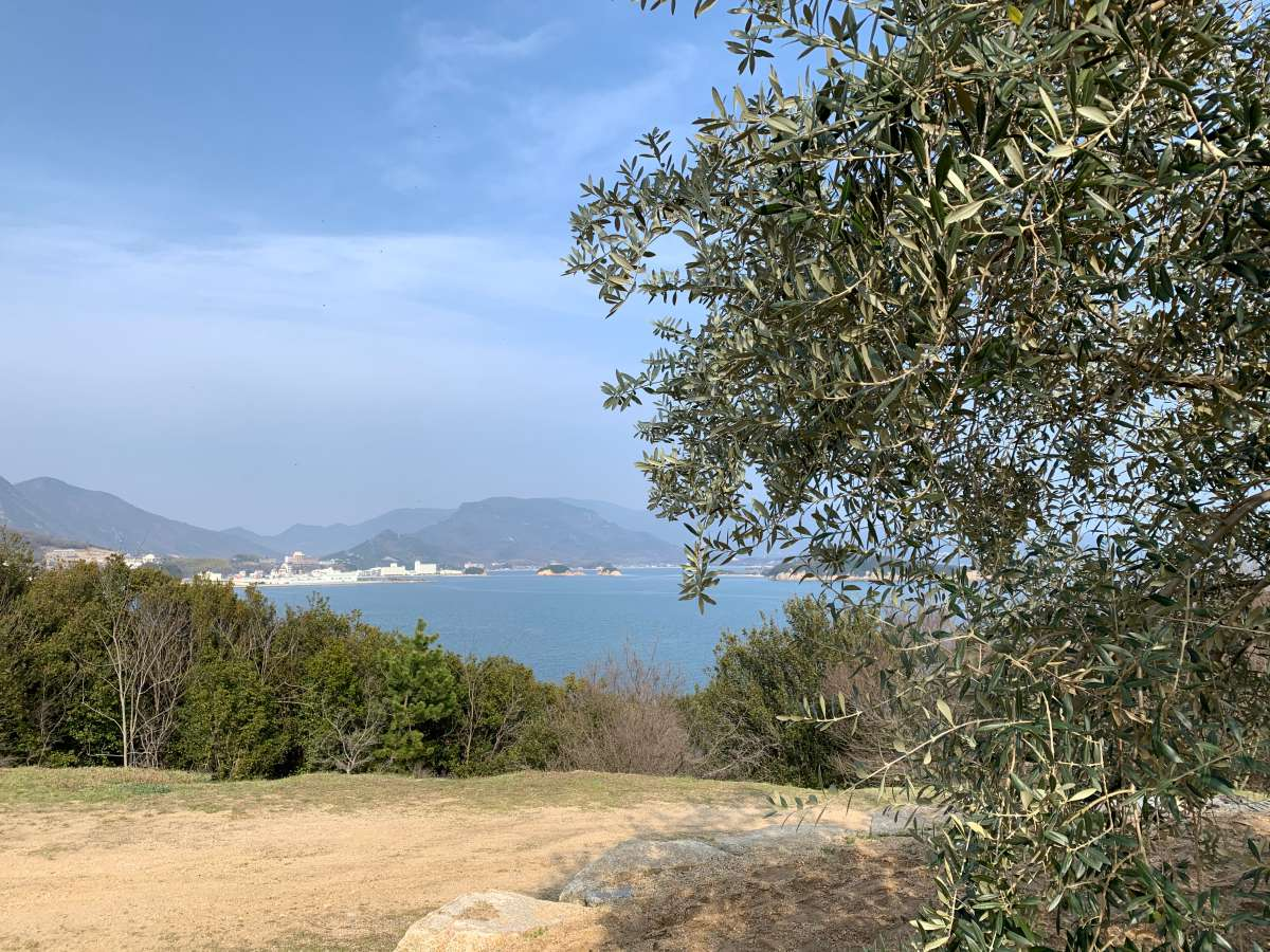 樹齢千年のオリーブの樹と海